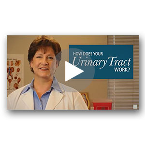How Does Your Urinary Tract Work?
